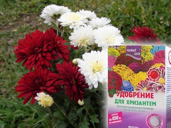 пакет с удобрением для хризантем