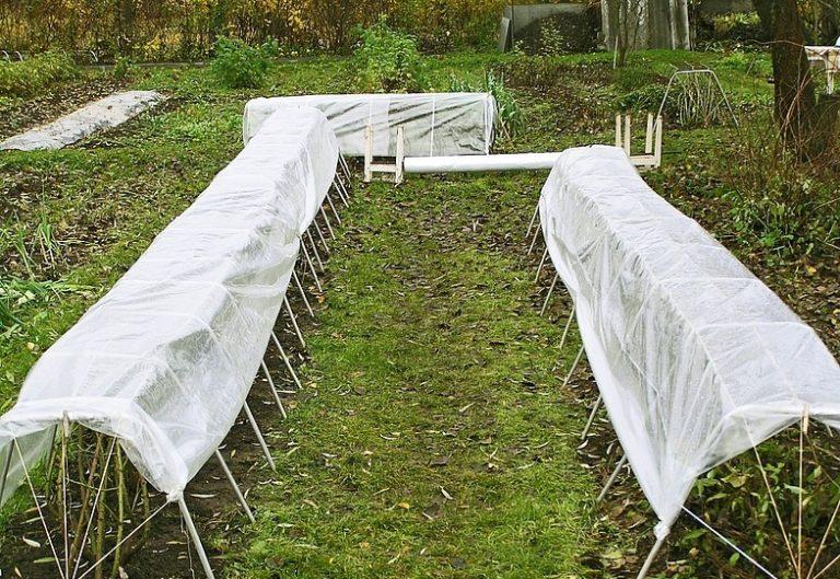 способы защиты розы от холода