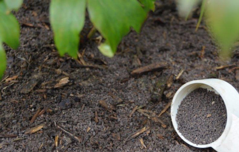 уход за пионами осенью внесение подкормки под кусты