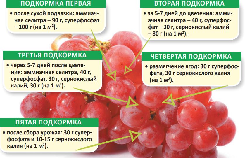 основные виды подкормки винограда