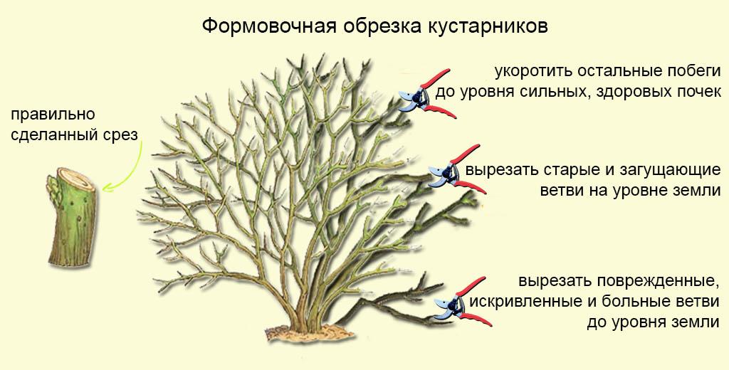 правила формировки куста