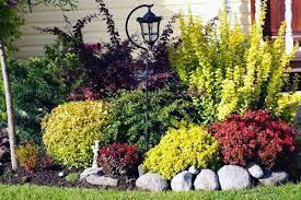 уход за барбарисом осенью формирование кустов