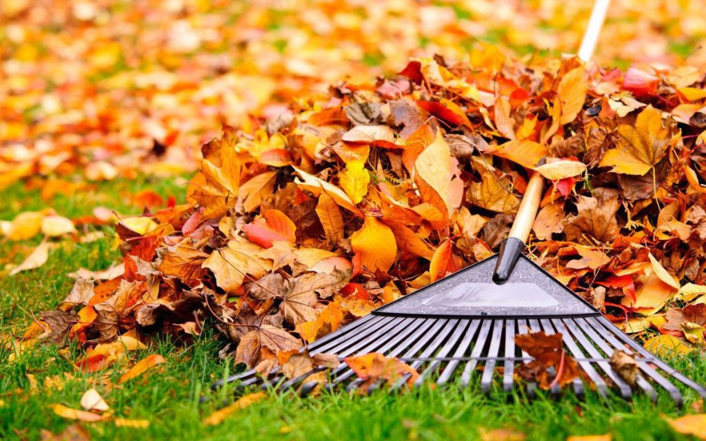 сбор листвы на газоне