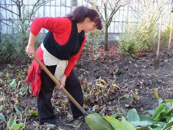 уход за канной осенью выкапывание клубней