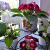 цветы глоксинии на подоконнике