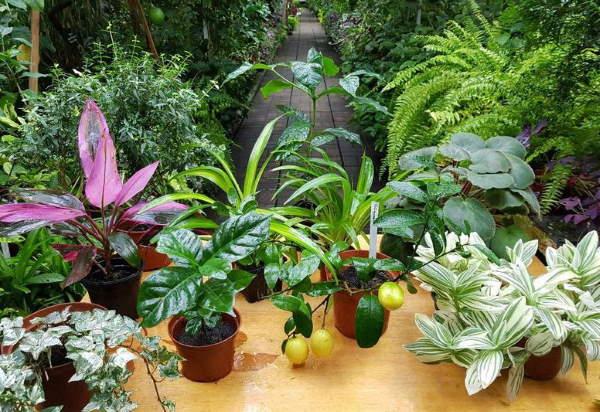 уход за комнатными растениями зимой и его проведение