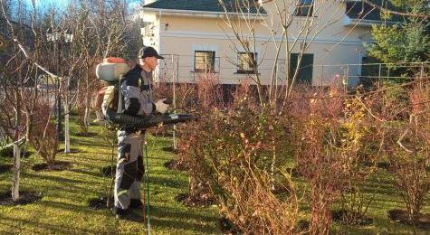 уход за жасмином осенью опрыскивание куста