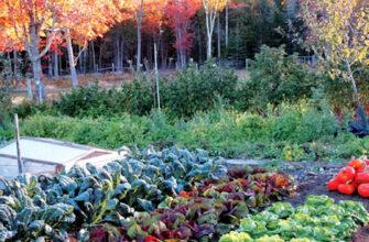 овощи на огороде осенью