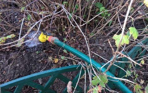 уход за сливой осенью и полив сливового дерева