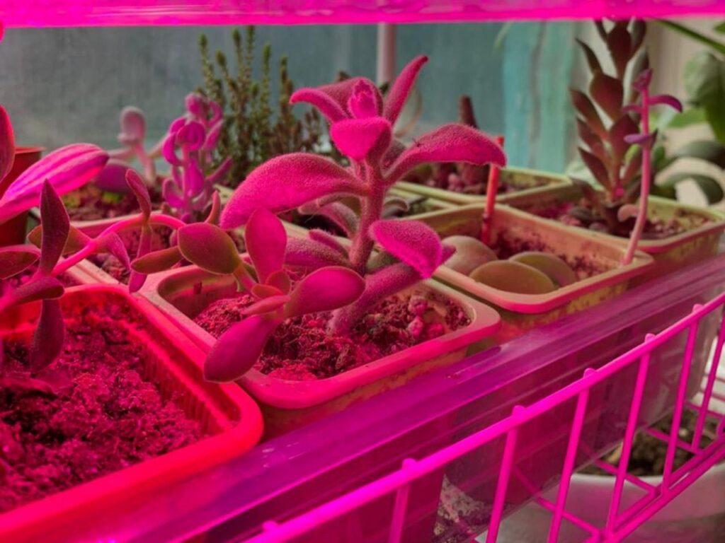 освещение цветов на подоконнике