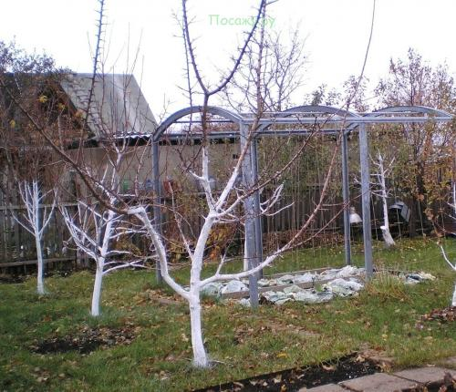 побелка деревьев и уход за садом зимой