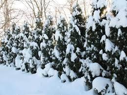 ти покрытые снегом