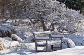 сад покрытый снегом