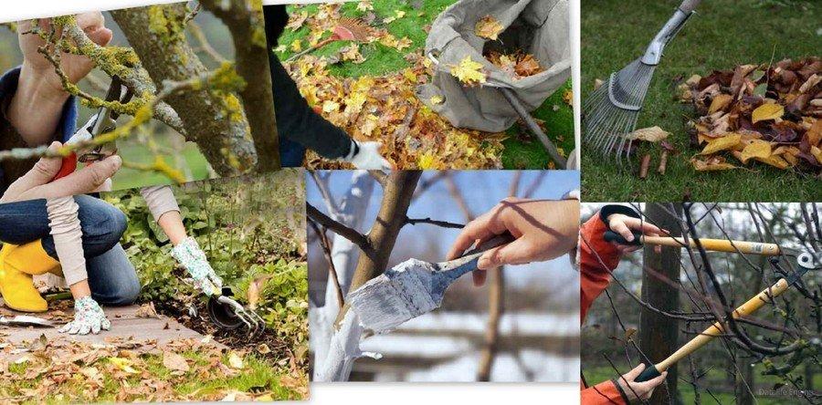 уход за садом осенью и все виды работ