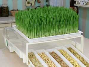 семена для выращивания зелени